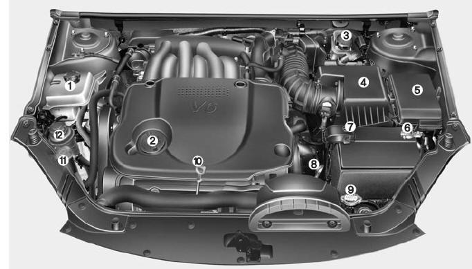 Engine Compartment - Maintenance